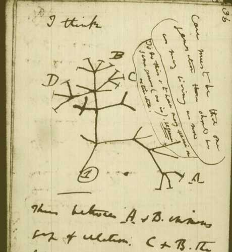 Darwin's tree of life (image from theguardian.com)